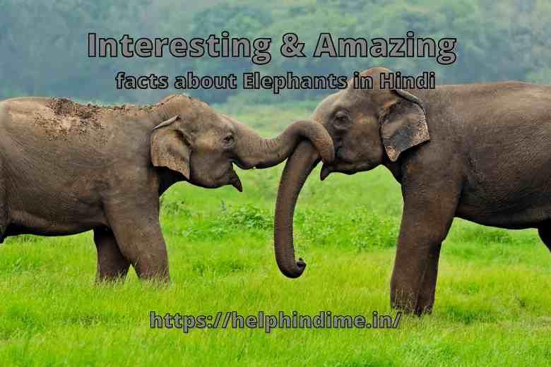 https://helphindime.in/interesting-amazing-facts-about-elephants-information-essay-rochak-jankari-in-hindi/