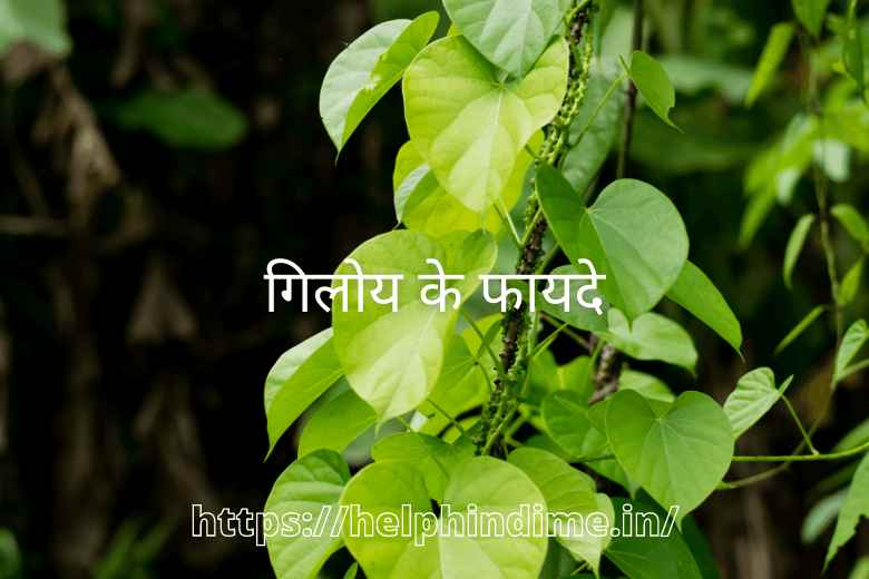 https://helphindime.in/giloy-benefits-in-hindi/
