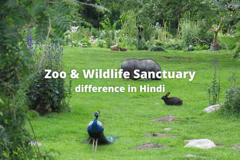 Difference between Zoo and Wildlife Sanctuary in Hindi