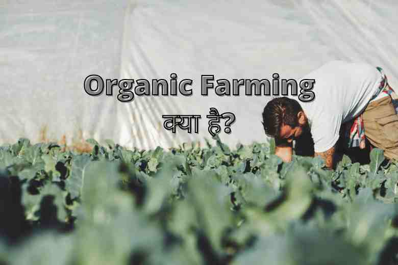 Organic Farming Benefits in Hindi